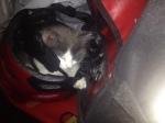 KITTEN TOBY SLEEPING IN MY BIKE HELMET