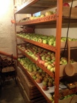 APPLES STORED FOR THE WINTER AT THE PARENTS HOUSE