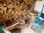 READY FOR WINTER, WALNUTS AND FIREWOOD