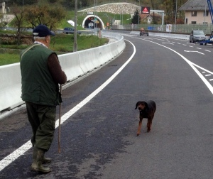 LAST TIME THIS DOG WILL BE LEASH FREE ON THE HIGHWAY.