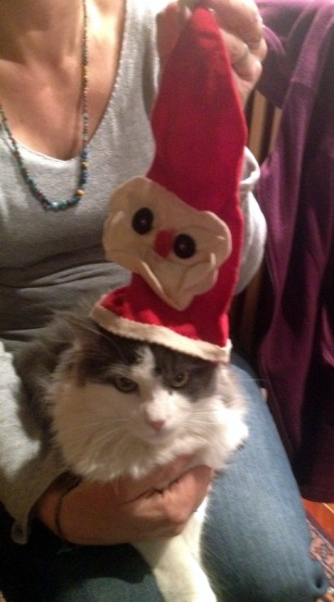 TOBY DRESSING UP FOR CHRISTMAS