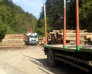 SUSTAINABLE LOGGING-NO CLEAR CUTS