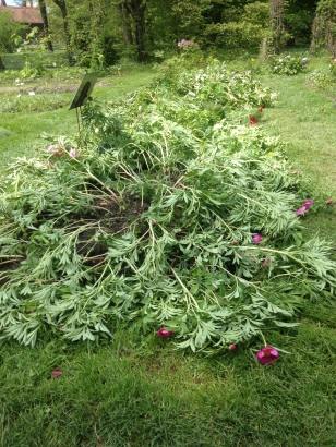 PLANTS DAMAGED AT THE BOTANICAL GARDEN