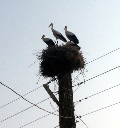 MORE STORKS, IT'S SUPER COOL