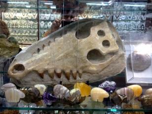 FOSSIL TIGER JAW