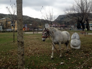SOMEONE TIED UP THEIR HORSE IN THE PARK?