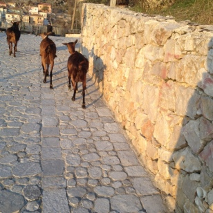 TAKING THE GOAT TRAIL TO HOSTEL