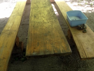 CLEANING MOLDY PICNIC TABLES