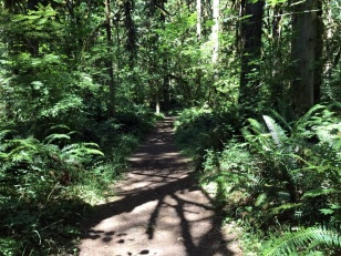 HIKING TRAIL TO CAMPSITE