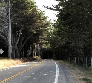CYPRESS TUNNEL OF TREES