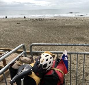 100 BIRDS ON THE BEACH