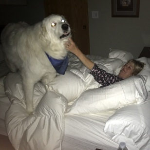 POLAR BEAR IN MARY'S BED