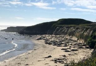 SEAL COVERED BEACH